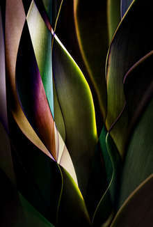 Cactus Abstraction 04