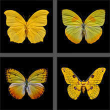 Butterfly Grid yellow
