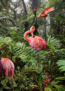 Two Lost Flamingos and a Spoonbill